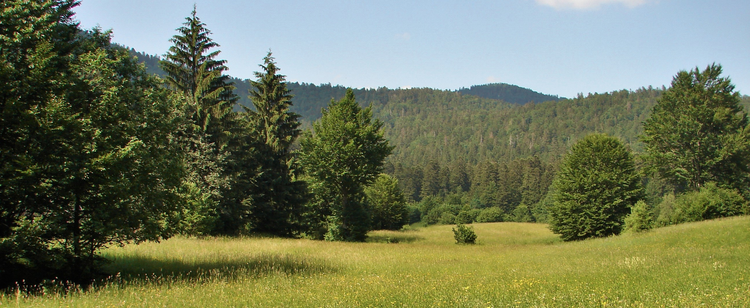 Kamo na izlet? Poučna staza Leska i Nacionalni park Risnjak, Gorski kotar - oaza mira i zelenila na putu između Zagreba i mora
