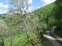 croatia-vacation-kupa-river- (34)